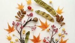 рукоделие - Гербарий: выбор растений, сушка, оформление, гербарий в школу, детские поделки