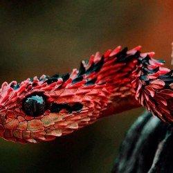 К чему снится ползущая змея